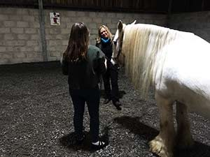 equine facilitated learning cornwall